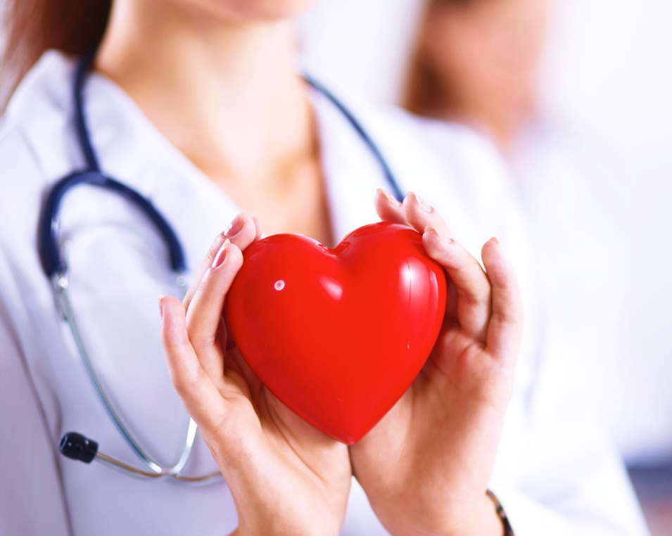 interesting facts about heart in hindi