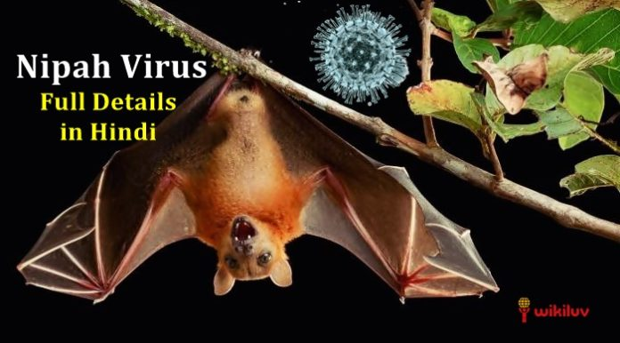 nipah virus symptoms and treatment